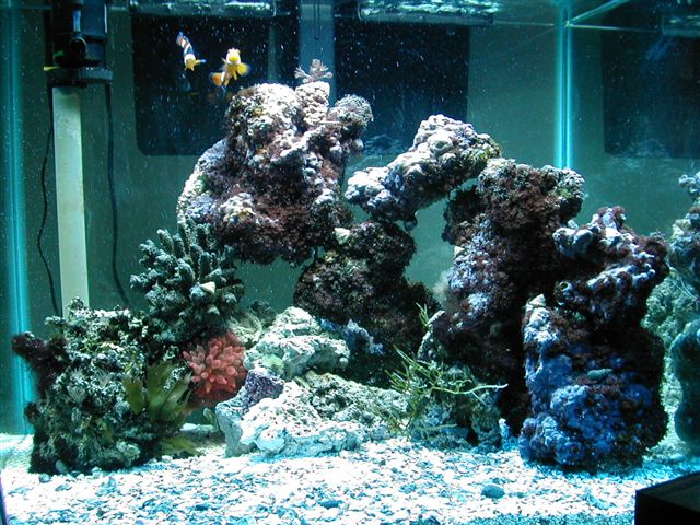 37 gallon reef tank for 37 gallon fish tank